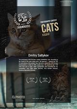 35PHOTO Cats