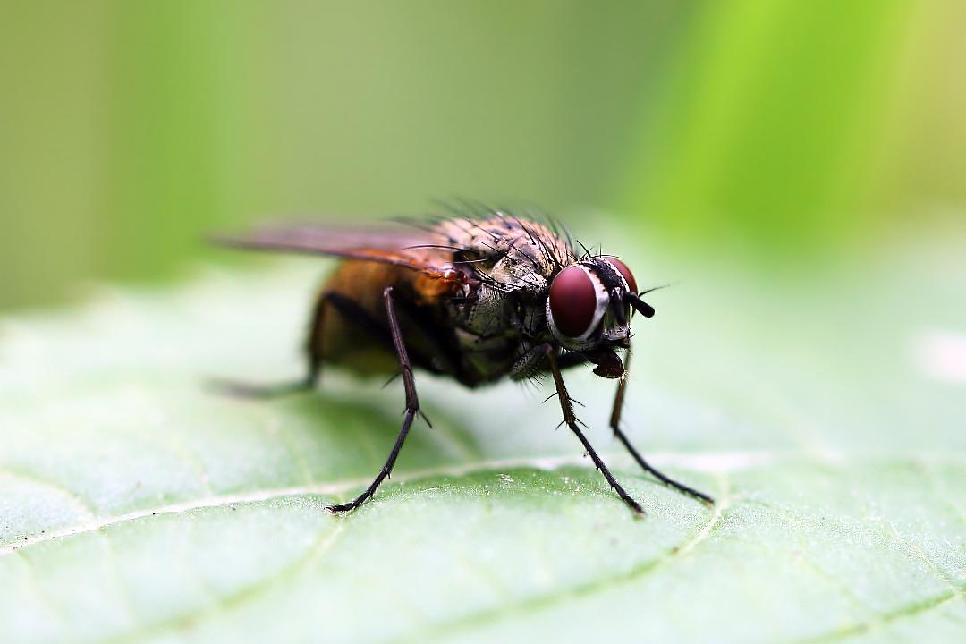 венерических заболеваний, муха мутант картинки заключенный